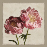 Botanical Peony Prints by Janel Pahl