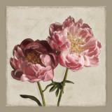 Botanical Peony Prints by Janel Pahl