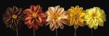 Floral Salute Posters af Assaf Frank