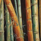Caribbean Bamboo II Prints by Tita Quintero