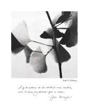 Delicate Ginkgo Poster by Debra Van Swearingen