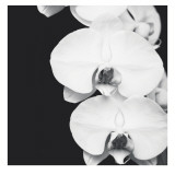Orchid Portrait II Print by Jeff Maihara
