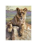Serengeti Lioness Giclee Print by Kalon Baughan