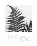 Delicate Ferns Affiches par Debra Van Swearingen