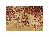 Colorful Season I Giclee Print by Pela & Silverman Pela & Silverman