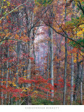 Christopher Burkett - Glowing Autumn Forest, Virginia - Tablo
