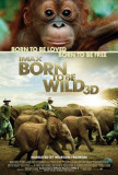Born To Be Wild Prints