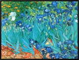Irises, c.1889 Framed Canvas Print
