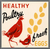 Healthy Poultry-Fresh Eggs Framed Canvas Print