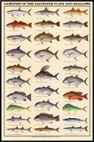 Game Fish of the Saltwater Flats and Shallows Framed Canvas Print