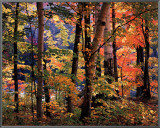 Maples and Birches Framed Canvas Print by Joseph Holmes