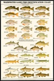 Warmwater Gamefish of North America Framed Canvas Print