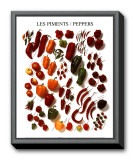 Peppers Framed Canvas Print