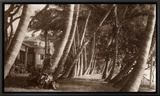 Coconut Lane, Waikiki, Hawaii, 1916 Framed Canvas Print
