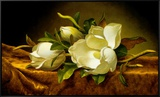 Magnolias on Gold Velvet Cloth Framed Canvas Print by Martin Johnson Heade