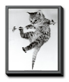 Kitten on a Clothes Line Framed Canvas Print by Erik Parbst