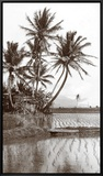 Coco Palms, Oahu, 1926 Framed Canvas Print