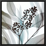 Eucalyptus Framed Canvas Print by Steven N. Meyers