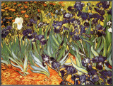 Irises, Saint-Remy, c.1889 Framed Canvas Print