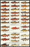 Trout, Salmon & Char of North America I Framed Canvas Print