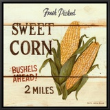 Fresh Picked Sweet Corn Framed Canvas Print by David Carter Brown