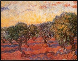 The Olive Grove, c.1889 Framed Canvas Print