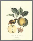 Apple Framed Canvas Print by Pierre-Antoine Poiteau