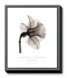 Daffodil II Framed Canvas Print by Steven N. Meyers