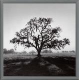 Oak Tree, Sunrise Framed Canvas Print by Ansel Adams