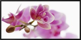 Orchid in Bloom Framed Canvas Print