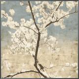 Cherry Blossoms I Framed Canvas Print by John Seba