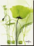 Amapola verde II Reproducción en lienzo de la lámina por Marthe