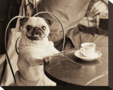 Cafe Pug Stretched Canvas Print by Jim Dratfield