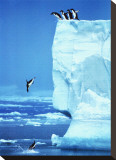 Penguins Diving Off an Iceberg Stretched Canvas Print by Steve Bloom