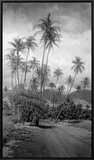 Coconut Grove, Lahaina, 1910 Framed Canvas Print by Ray Jerome Baker