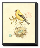 Gilded Songbird II Framed Canvas Print by Chad Barrett