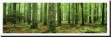 Rain Forest Stretched Canvas Print