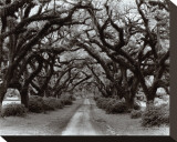 Path in the Oaks II, Louisiana Stretched Canvas Print by Monte Nagler