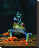 Frogs Stretched Canvas Print