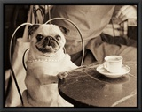 Cafe Pug Framed Canvas Print by Jim Dratfield