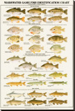 Warmwater Gamefish of North America Stretched Canvas Print