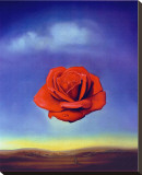 Rose Medidative, c.1958 Stretched Canvas Print by Salvador Dalí