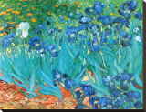 Irises, c.1889 Stretched Canvas Print