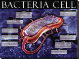 Bacteria Cell Stretched Canvas Print