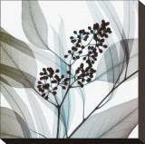Verde eucalipto Stampa trasferimenti su tela di Steven N. Meyers