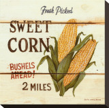Fresh Picked Sweet Corn Stretched Canvas Print by David Carter Brown
