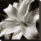 Pure Lily Stretched Canvas Print