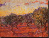 The Olive Grove, c.1889 Stretched Canvas Print