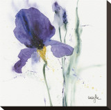 Iris I Stretched Canvas Print by  Marthe