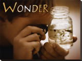 Wonder Stretched Canvas Print